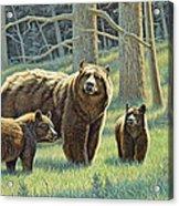 The Family - Black Bears Acrylic Print