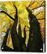 The Family Tree Acrylic Print