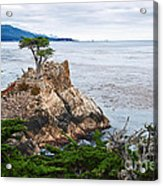 The Famous Lone Cypress Tree At Pebble Beach In Monterey California Acrylic Print