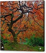 The Famous Tree At Portland Japanese Garden Acrylic Print