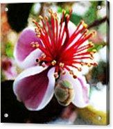 the Feijoa Blossom Acrylic Print