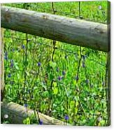 The Fence At The Meadow Acrylic Print