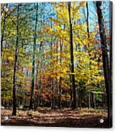 The Final Days Of Autumn Color Acrylic Print