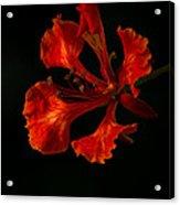 The Fire Flower Acrylic Print
