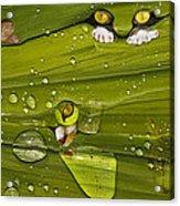 The First Rain Acrylic Print