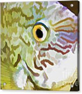 The Fish Acrylic Print