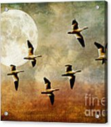 The Flight Of The Snow Geese Acrylic Print by Lois Bryan