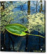 The Floating Leaf Of A Water Lily Acrylic Print