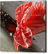 The Flower And The Butterfly Acrylic Print