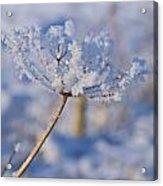 The Flower Crystal Acrylic Print by Dave Woodbridge