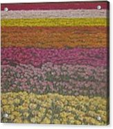 The Flower Field Acrylic Print