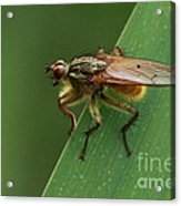 The Fly ? Acrylic Print by Peter Skelton