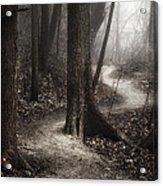 The Foggy Path Acrylic Print by Scott Norris