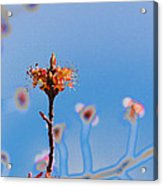 The Following Acrylic Print
