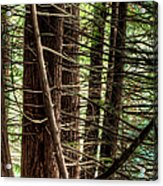 The Forest Combed By The Wind In The Lake Acrylic Print