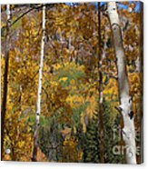The Forest For The Trees Acrylic Print
