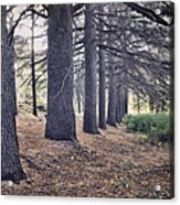 The Forest Of A Thousand Stories Acrylic Print