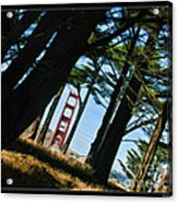 The Forest Of The Golden Gate Acrylic Print