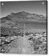 The Forever Road Acrylic Print