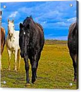 The Four Musketeers Acrylic Print