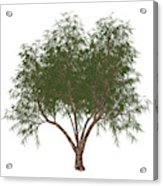 The French Tamarisk Tree Acrylic Print