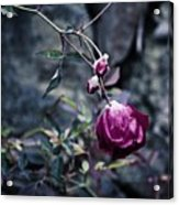 The Friday The 13th Rose Acrylic Print