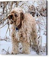 The Fur Coat Acrylic Print