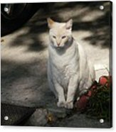 The Garden Cat Acrylic Print