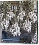 The Garlic Harvest Acrylic Print
