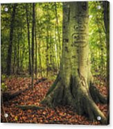 The Giving Tree Acrylic Print