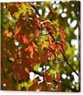 The Glory Of Autumn Acrylic Print