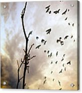 The Gods Laugh When The Winter Crows Fly Acrylic Print by Bob Orsillo