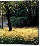 The Golden Gingko Path Acrylic Print