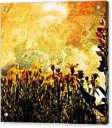 The Golden Hour Acrylic Print