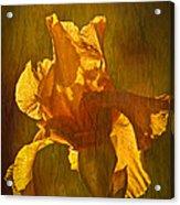 The Golden Iris Acrylic Print