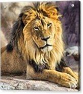The Golden King 2 Acrylic Print