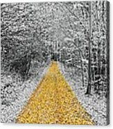 The Golden Path  Acrylic Print
