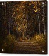 The Golden Road Acrylic Print by Stuart Deacon