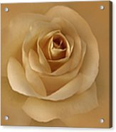 The Golden Rose Flower Acrylic Print by Jennie Marie Schell