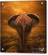 The Golden Savanna Acrylic Print by Lynn Jackson