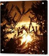 The Golden Sunset Acrylic Print