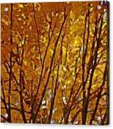 The Golden Tree Acrylic Print