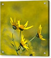 The Golden Wildflowers Acrylic Print