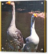 The Goose And The Gander Acrylic Print
