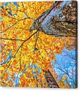 The Gorgeous Fall Acrylic Print