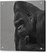 The Gorilla Acrylic Print