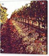 The Grapes Of The Wine Country Acrylic Print