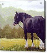 The Grass Is Greener  Acrylic Print by John Silver