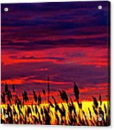 The Grasses Reach  Acrylic Print by Q's House of Art ArtandFinePhotography