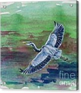 The Great Blue Heron Acrylic Print